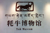 Exploration of Yak Museum in Tibet