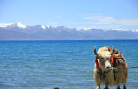 namtso lake, holy lakes, nagqu, lhasa sightseeing, potala palace